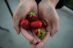 Handful of clean organic strawberries on a concrete patio royalty free stock images