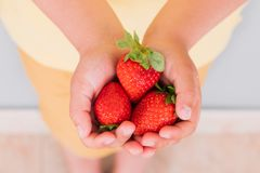 A handful of strawberries in the hands stock image
