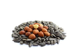 Handful of sunflower seeds and hazelnuts Royalty Free Stock Photos