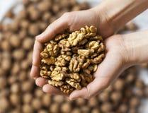 Handful of walnuts kernels Royalty Free Stock Photo