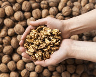 Handful of walnuts kernels Royalty Free Stock Image