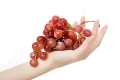 Handfull of grapes. Studio shot of hand holding grapes, isolated on white royalty free stock photography