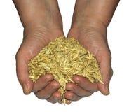 Handfull of oats Stock Photos