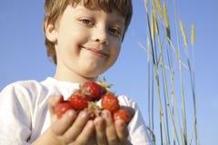 Handfulljordgubbe i händer av pojken Arkivbilder
