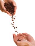 Handfuls of coffee beans Royalty Free Stock Image