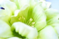 Handgemachte künstliche Blumen des Makroschusses Stockfoto