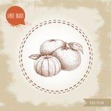 Handgemachte Skizzenmandarinenzusammensetzung mit Blättern und abgezogener Mandarine Lizenzfreie Stockbilder