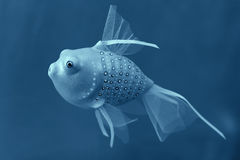 Handgemachte Spielzeugfische Lizenzfreies Stockfoto