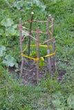 Handgemachtes Fechten für Baum lizenzfreies stockfoto