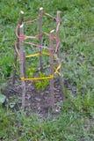 Handgemachtes Fechten für Baum lizenzfreie stockfotografie