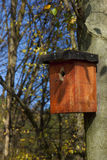Handgemachtes Vogelhaus auf dem Baum im Herbst Stockfoto