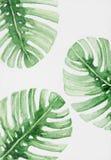 Handgemalte abstrakte Aquarellblätter von monstera Anlage stockfoto