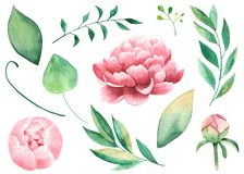 Handgemalte Aquarell Pions, Blumen, Blätter, Niederlassungen, Laub lizenzfreie abbildung