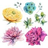 Handgemalte Aquarellblumen eingestellt in Weinleseart Stockbilder