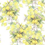Handgemalte Aquarellillustration nahtloses Muster mit Zitronenbaumniederlassungselementen stock abbildung