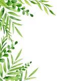 Handgemalter Aquarellrahmen mit Blättern und Brunchs lizenzfreie abbildung