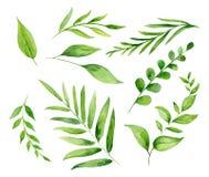 Handgemalter Aquarellsatz mit Blättern und Brunchs stock abbildung