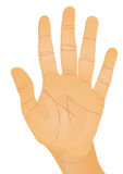 Handgeste - Palme Stockfoto
