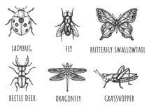 Handgezogene Insekten-Wanzensammlung lizenzfreies stockbild