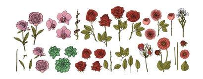 Handgezogene Sammlung Blumen Rosen, Pfingstrose, saftig, Orchidee, Dahlie, Vektorblumenmusterelemente lizenzfreie abbildung