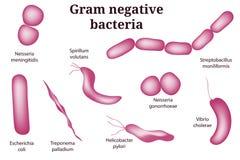 Handgezogener Mikrobiologiesatz Vorbereitungen für bakteriellen Mikroorganismus des Gram negativ vektor abbildung