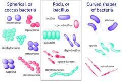 Handgezogener Mikrobiologiesatz Vorbereitungen für bakteriellen Mikroorganismus Kokke, Bazillus, gekurvt vektor abbildung