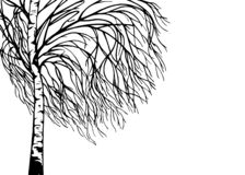 Handgezogenes Baum-Birkenschattenbild stockbilder