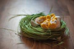 Handgjord höna i skal Påskdekor av fågelungar och vårgräs Stack hönor på gräset royaltyfria bilder