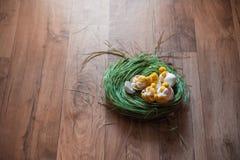 Handgjord höna i skal Påskdekor av fågelungar och vårgräs Stack hönor på gräset royaltyfria foton