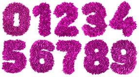 Handgjord nummeruppsättning från magentafärgade färgrester av papper Royaltyfri Fotografi