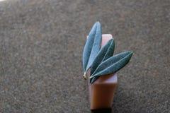 Handgjord olivgrön tvål med sidor av olivträdet på det bästa - bild royaltyfri bild