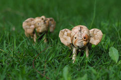 Handgjort anseende för elefantrotting till och med högväxt gräs Arkivfoto