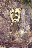 handgjort Halsband med buddhas på stenen på solig dag royaltyfri foto