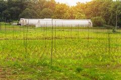 Handgjort växthus för polyetentunnel Royaltyfri Bild