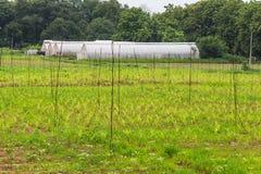 Handgjort växthus för polyetentunnel Royaltyfria Bilder