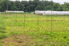 Handgjort växthus för polyetentunnel Arkivbilder