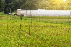 Handgjort växthus för polyetentunnel Arkivbild