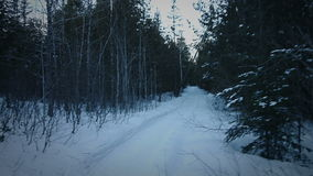 Handheld отснятый видеоматериал кто-то идя в лес в зиме только перед ночой акции видеоматериалы