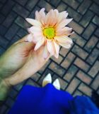 Handheld flower. In a wedding  plus dress and shoes Royalty Free Stock Image