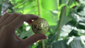 Handholding bitcoin met de groene tropische bladeren van de banaanpalm op achtergrond stock video