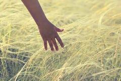 Handholding op pluimgras tegen zonsondergangachtergrond royalty-vrije stock fotografie