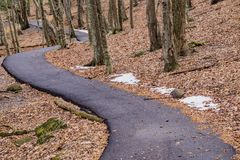 A Handicap Accessible Walking Path through the Woods Royalty Free Stock Photos