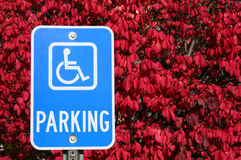 Handicap Parking Sign. Universal handicap parking sign with background of euonymus, or more commonly called burning bush Royalty Free Stock Photo