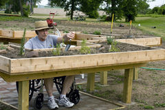Handicapped gardener. Handicapped  gardener working at enabling beds Stock Images