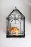 Handicraft elephant in black bird case. On white wall royalty free stock image