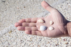 Handing Holding Assorted Seashells Royalty Free Stock Photos