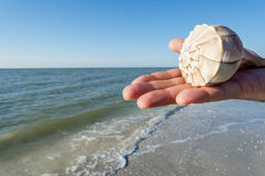 Handing Holding a Lighting Whelks #2 Stock Photography