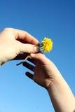 Handing Mom a Dandelion Royalty Free Stock Photography