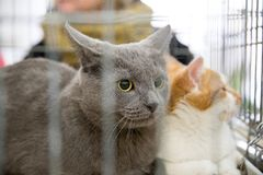 Handing out homeless cats. Ncompassionate people handing out homeless cats Royalty Free Stock Photos