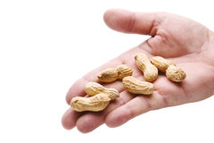 Handing you peanuts. Human hand reaching out to give you some peanuts isolated on white stock photo